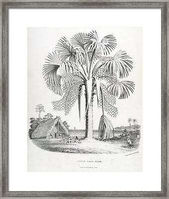 Pitch-lake Palm Framed Print by British Library
