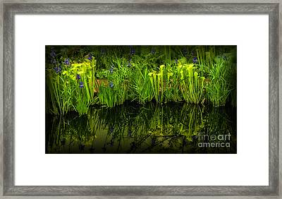 Pitcher Plant Paradise Framed Print by Mike Nellums