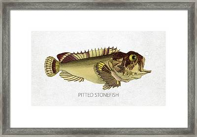 Pitted Stonefish Framed Print by Aged Pixel