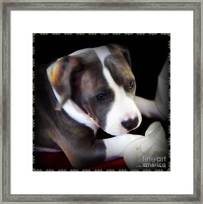 Pitty Lil Puppy Framed Print