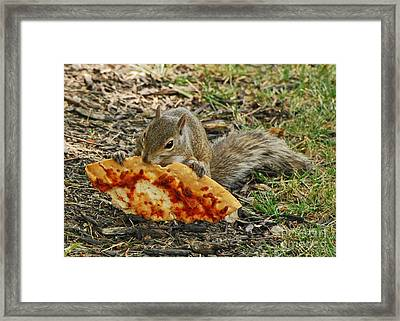 Pizza For  Lunch Framed Print