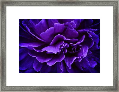 Placidity Framed Print