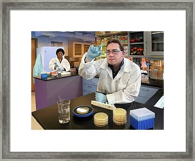 Plague Bacteria Detection Research Framed Print by Paul Pierlott/us Department Of Agriculture