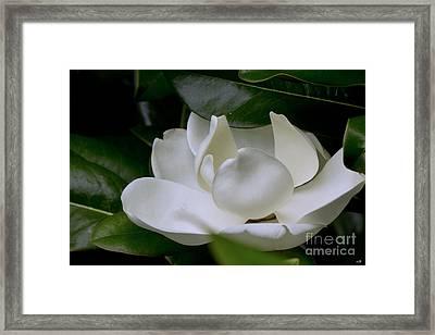 Plain Magnolia Framed Print