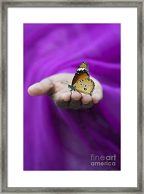 Plain Tiger Butterfly Framed Print by Tim Gainey