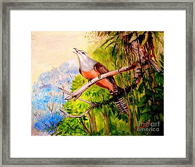 Plaintive Cuckoo Framed Print