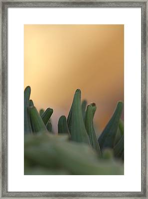 Planet Earth Framed Print