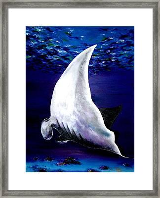 Plankton Quest Framed Print