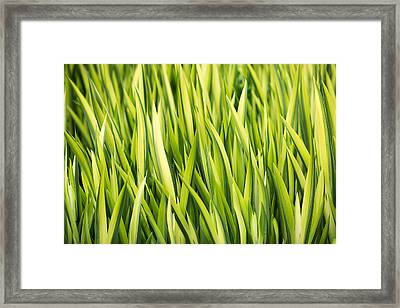 Plant Abstract 1 Framed Print by Rebecca Cozart