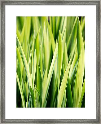 Plant Abstract 3 Framed Print by Rebecca Cozart
