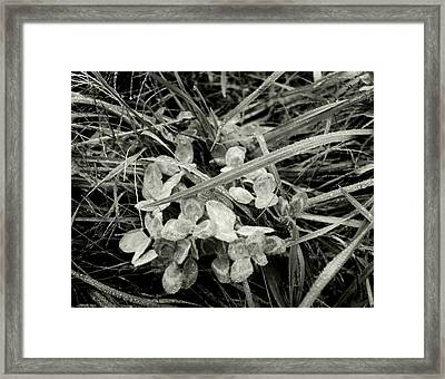 'plant And Grass With Dewdrops' Framed Print