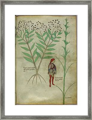 Plant Framed Print by British Library