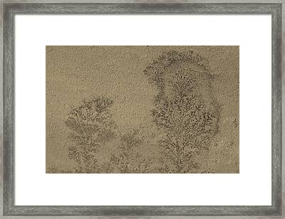 Plant Caught In Time Framed Print