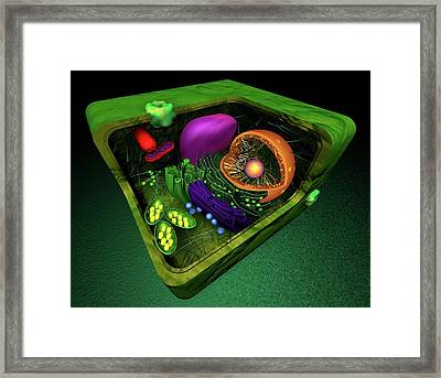 Plant Cell Framed Print by Sci-comm Studios