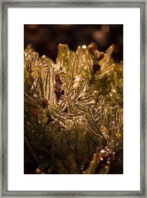 Plant Covered In Ice Framed Print
