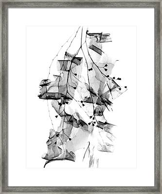 Plant Foliage And Bark Shavings Framed Print by Albert Koetsier X-ray