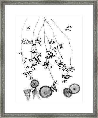 Plant Foliage And Mushrooms Framed Print by Albert Koetsier X-ray