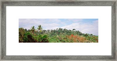 Plant Growth In A Forest, Manual Framed Print by Panoramic Images