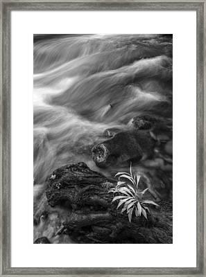 Little Plant Framed Print by Jon Glaser