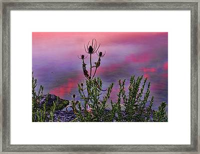 Plant Life By The Water Framed Print