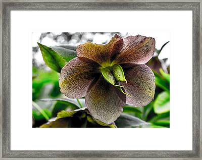 Plant Life Framed Print by Martin Newman
