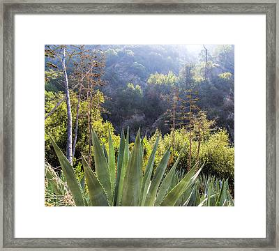 Plant Of The Century Framed Print