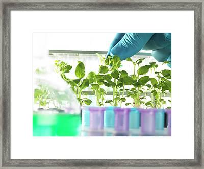 Plant Research Framed Print by Tek Image