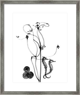 Plant Tendrils And Seahorses Framed Print by Albert Koetsier X-ray