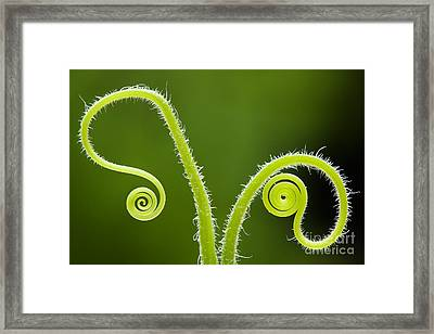 Plant Tendrils Framed Print by Tim Gainey