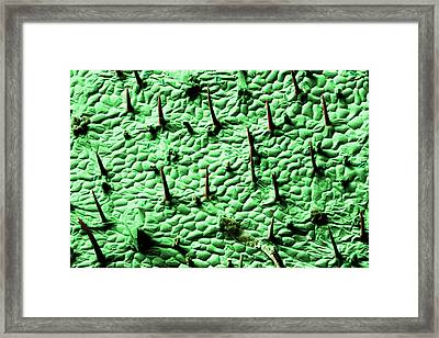 Plant Trichomes Framed Print