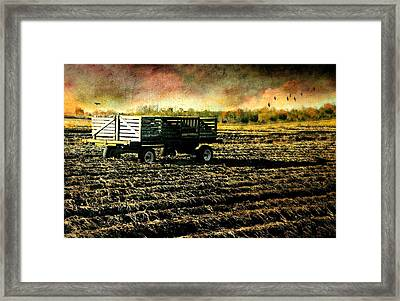 Plantation Framed Print