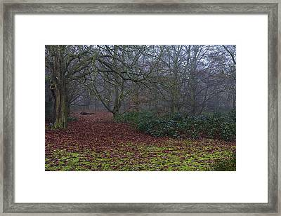Framed Print featuring the photograph Plantation Leaves by Maj Seda