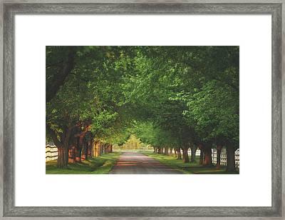 Plantation Path Framed Print by Carrie Ann Grippo-Pike