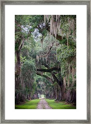 Plantation Path Framed Print