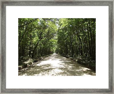 Plantation Road Framed Print by James McAdams