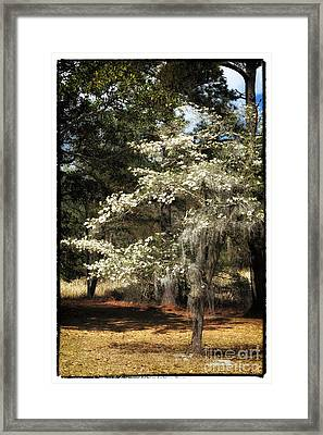 Plantation Tree Framed Print by John Rizzuto