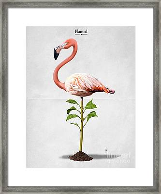 Planted Framed Print by Rob Snow