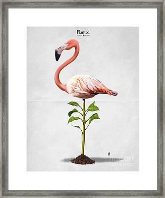 Planted Framed Print