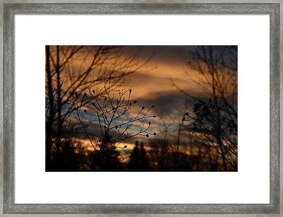 Planted Sunset Framed Print