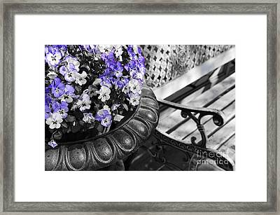Planter With Pansies And Bench Framed Print
