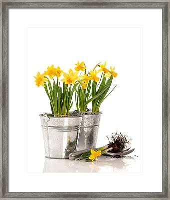 Planting Bulbs Framed Print by Amanda Elwell
