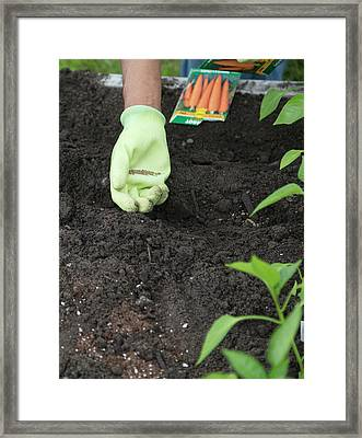 Planting Carrot Seeds Framed Print by Jim West