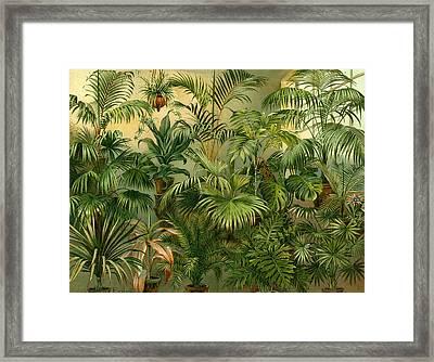 Plants 19th Century Kentia Baueri Chrysalidocarpus Framed Print