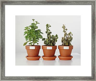 Plants Affected By Acid Rain Framed Print