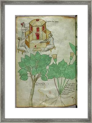 Plants And Glass-making Framed Print by British Library