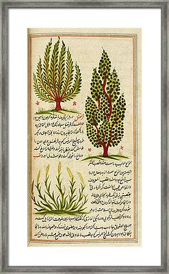Plants Framed Print by British Library