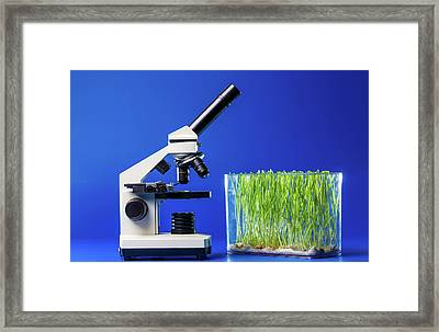 Plants Growing In Container Framed Print by Wladimir Bulgar