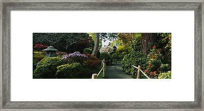 Plants In A Garden, Japanese Tea Framed Print by Panoramic Images