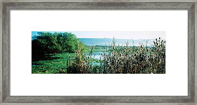Plants In A Marsh, Arcata Marsh Framed Print by Panoramic Images