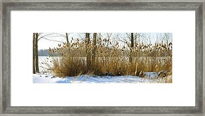 Plants In A Snow Covered Field Framed Print